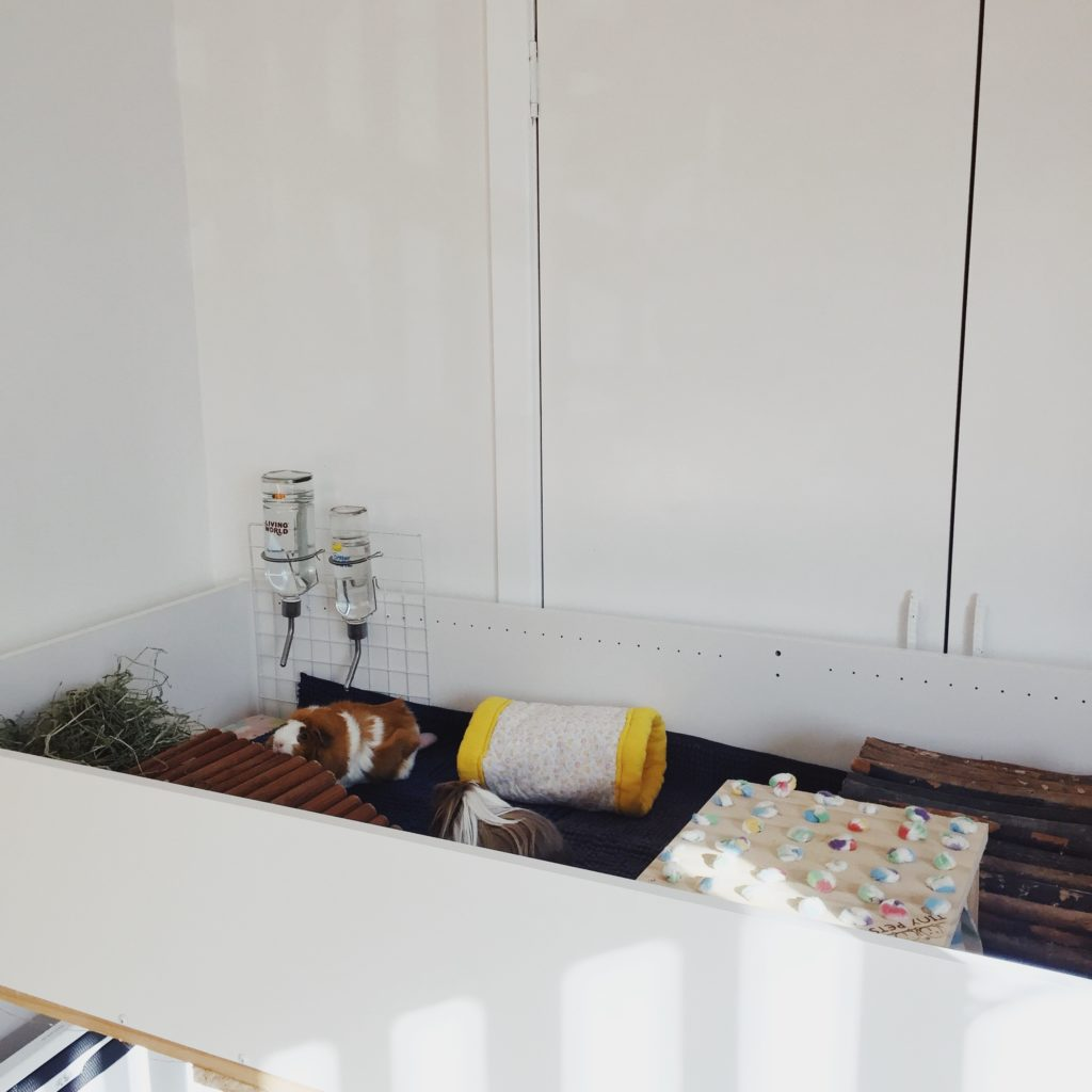 A handmade guinea pig cage, built from an IKEA bookcase and table legs.